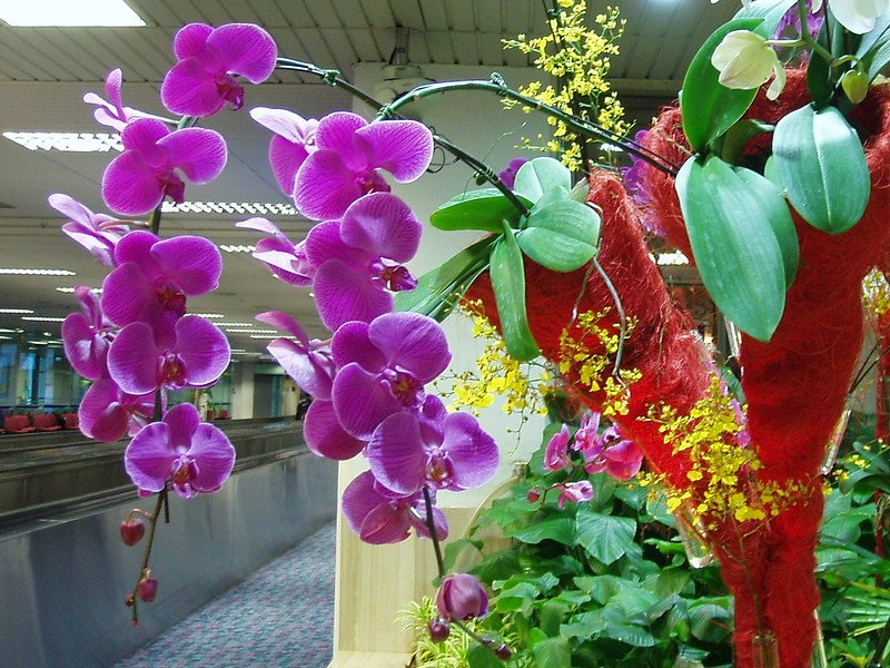 orchid garden at changi airport by amanda slater flickr
