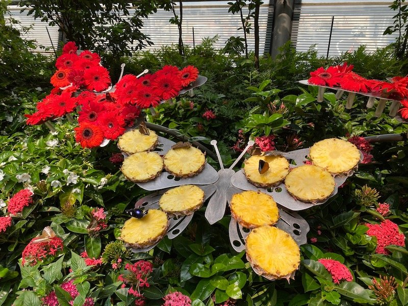things to do in singapore airport - butterfly garden 800
