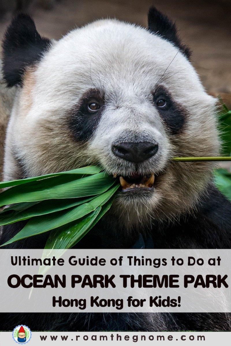 PIN ocean park hong kong panda 800