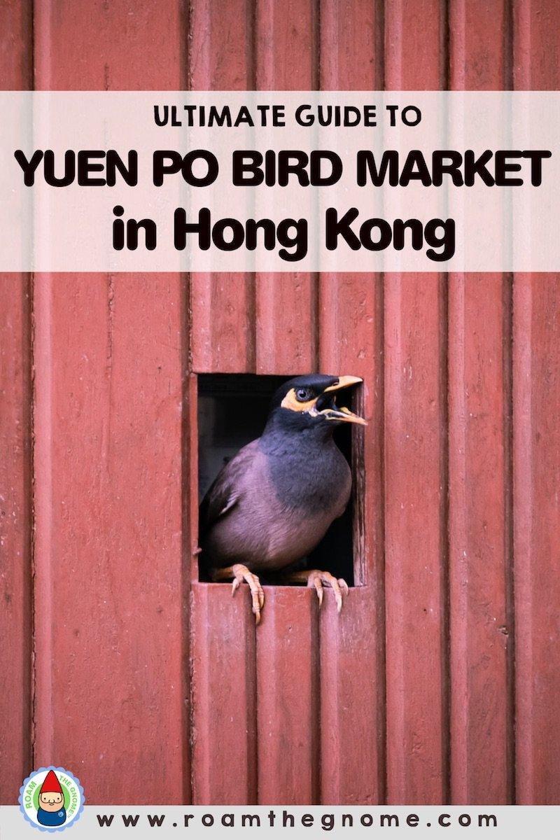 PIN yuen po bird market hong kong 800