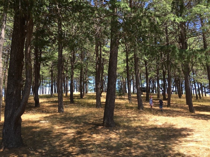 arboretum canberra nature play in the trees pic