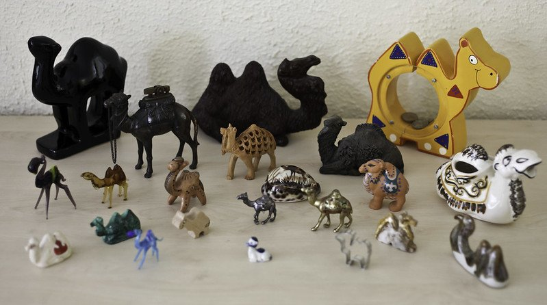 camel collection by cea