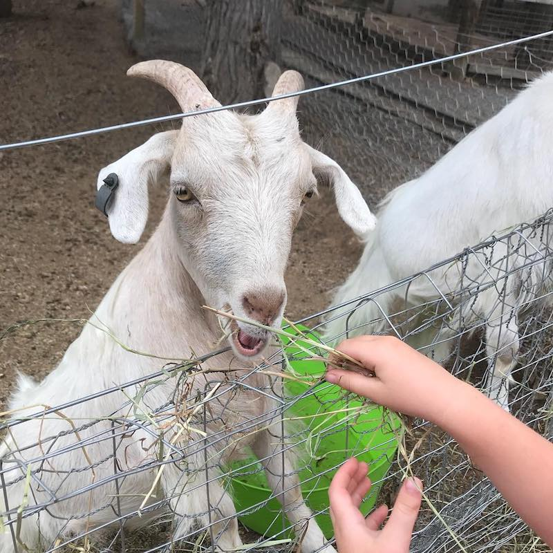 farm friends at yarralumla play station via fb
