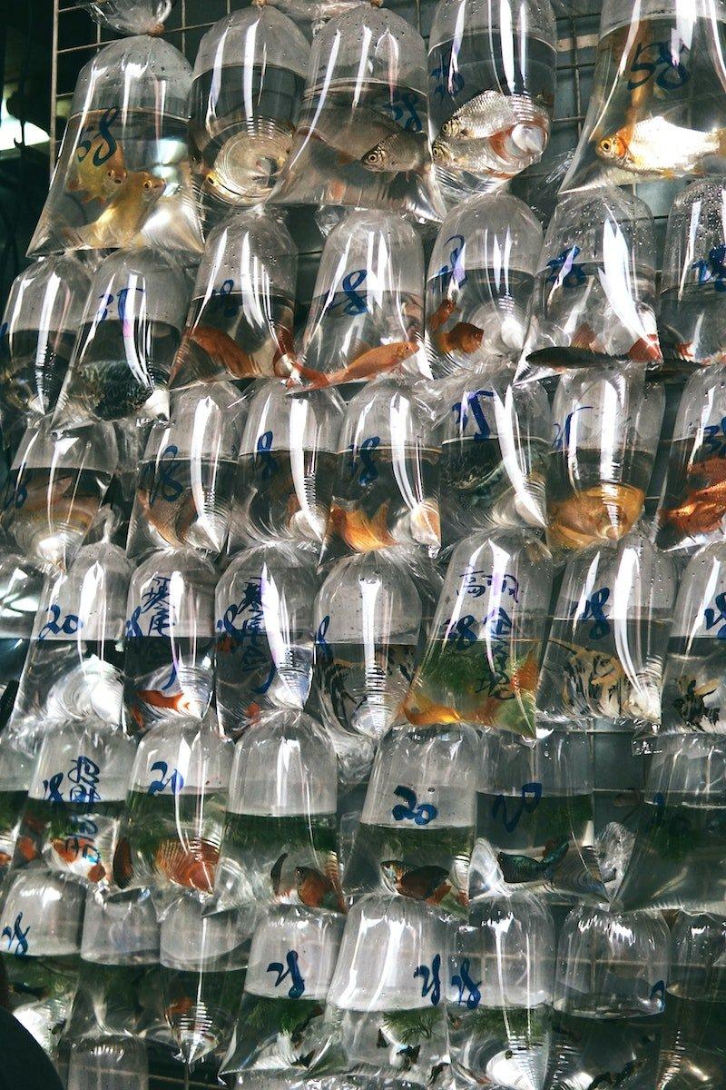 goldfish street hong kong pic by haley-truong