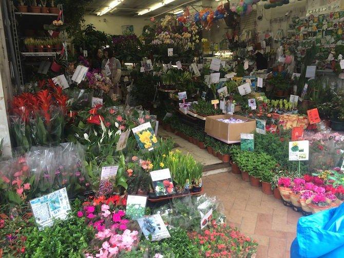 image - hong kong flower market view
