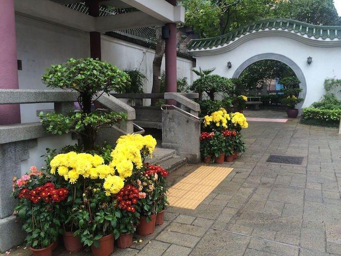 image - yuen po bird gardens flowers