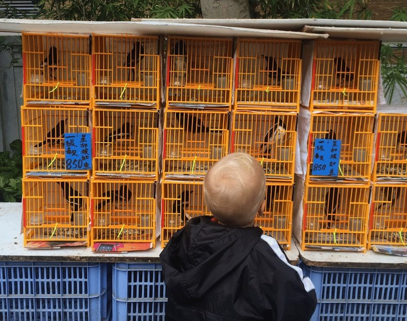 image - yuen-po-bird-gardens-jack-cages 800