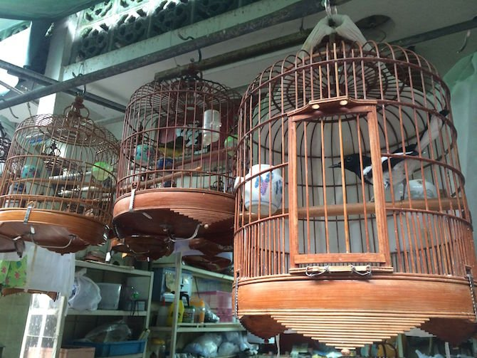 image - yuen po bird gardens timber cages
