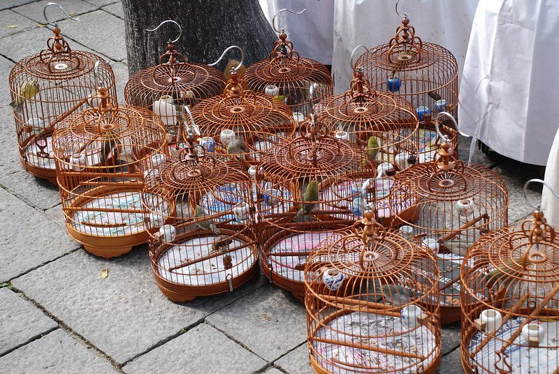 yuen po bird market cages by travel junction