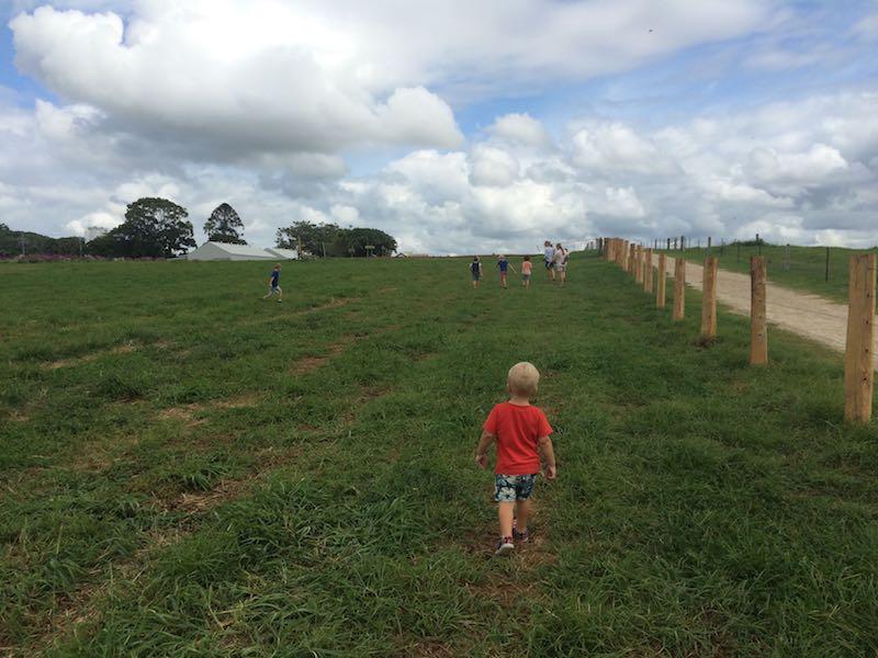 byron bay the farm fields