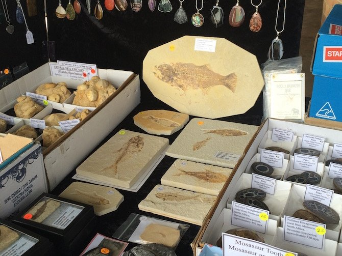 image - lismore gem festival fossils