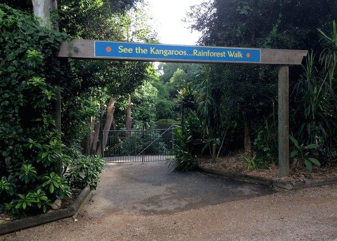 macadamia-castle-byron-bay-kangaroo-walk