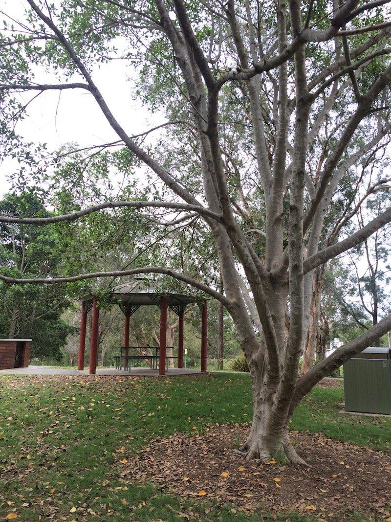 photo - funderwood hollow picnic spots