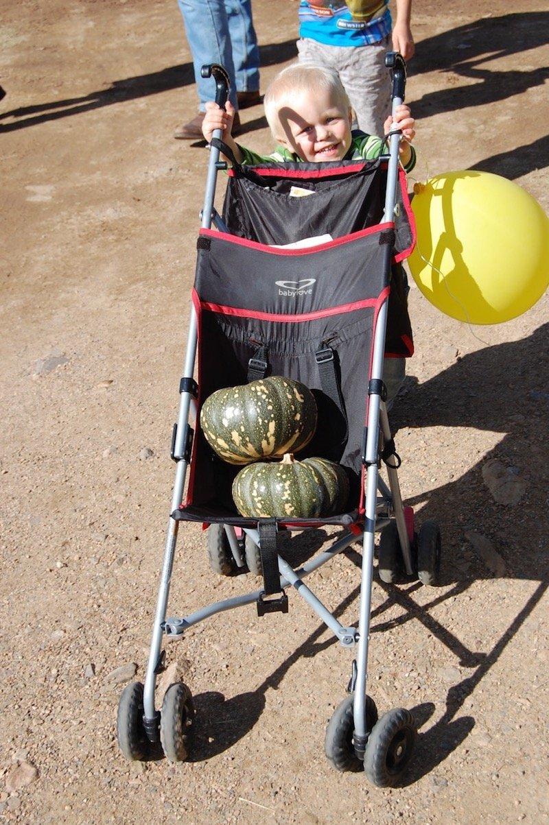 photo - goomeri pumpkin festival pumpkin in stroller