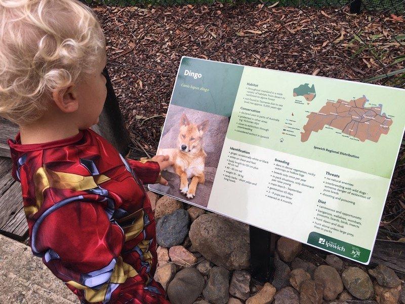 photo - ipswich nature centre dingo boards