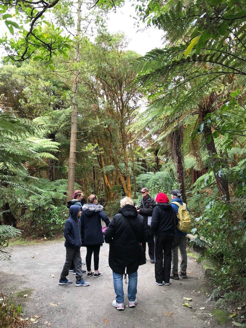 Hells Gate Rotorua wetlands walk pic