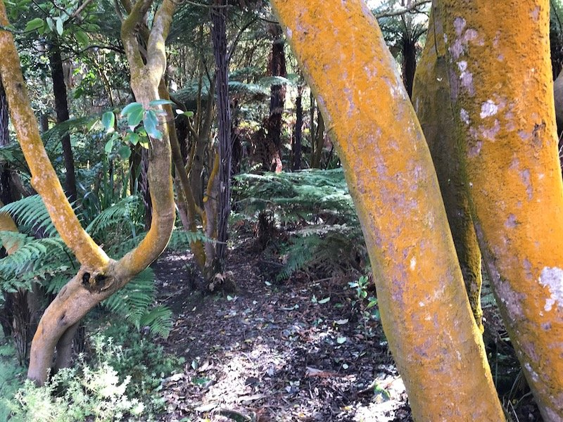 Hells Gate Rotorua yellow trees pic