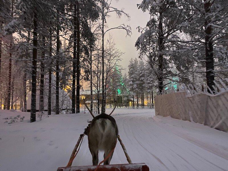 Image - reindeer ride rovaniemi