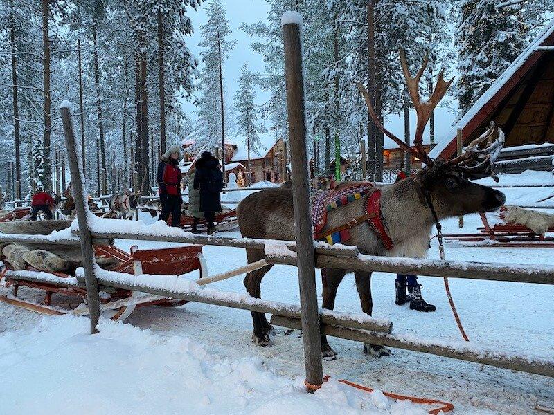 Image - reindeer sleigh ride rovaniemi