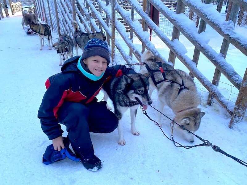 image - things to do in rovaniemi in winter husky ride