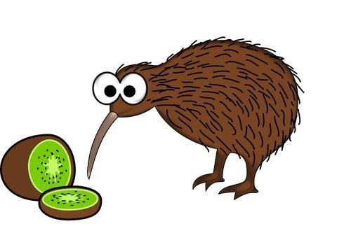 kiwi bird kiwiana pic by svg