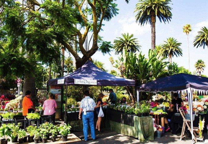 napier-urban-farmers-market