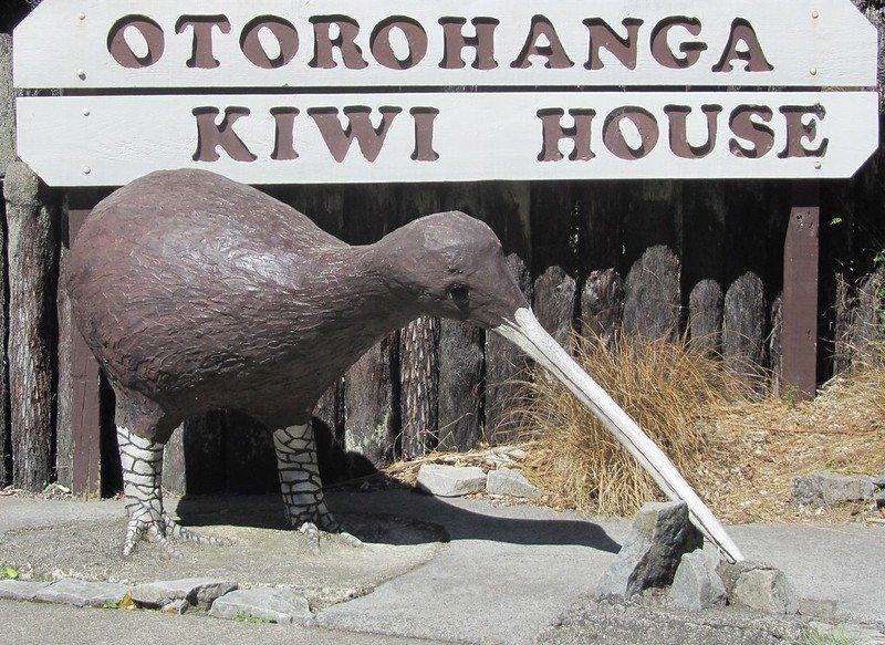 otorohanga kiwi house by anne and david
