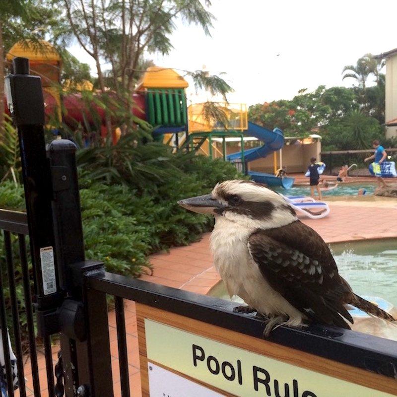 photo - turtle beach resort gold coast wildlife