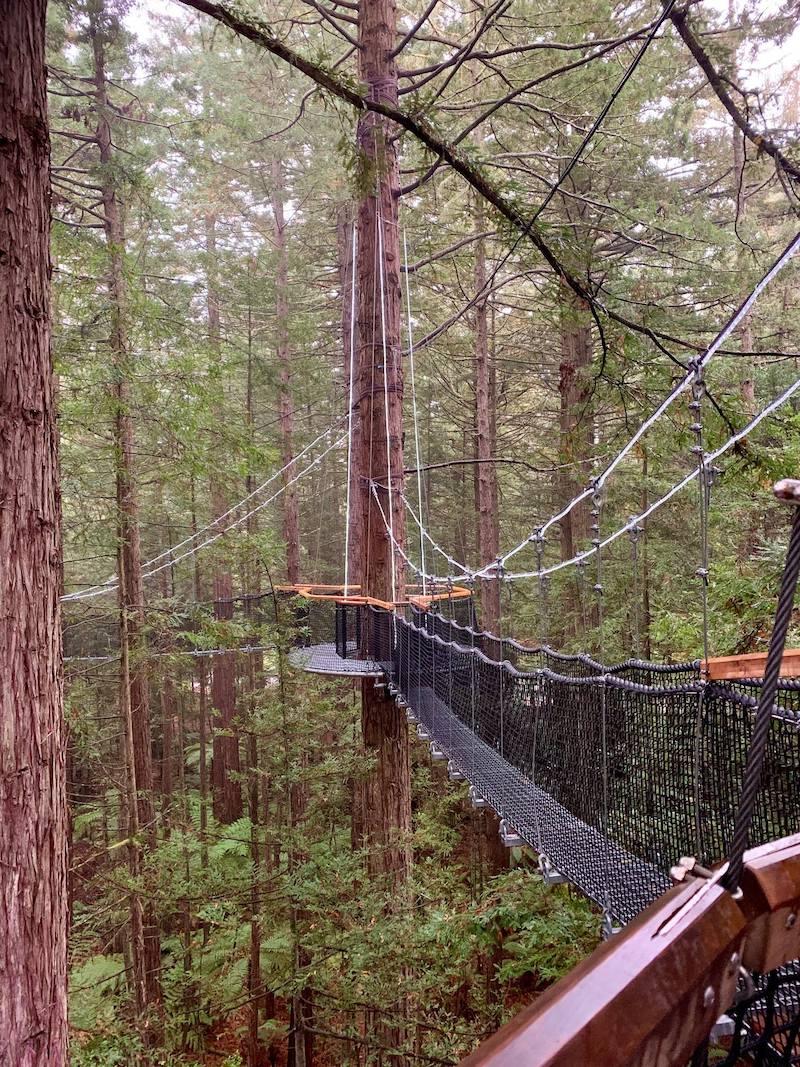 rotorua redwoods treewalk via fb