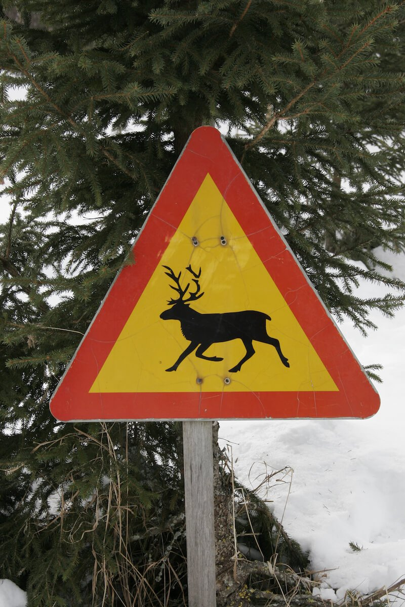 image- watch-out-reindeer-traffic-sign-rovaniemi