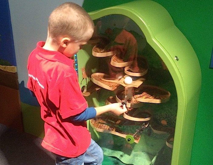 image - Childrens Museum of Manhattan armadillo game