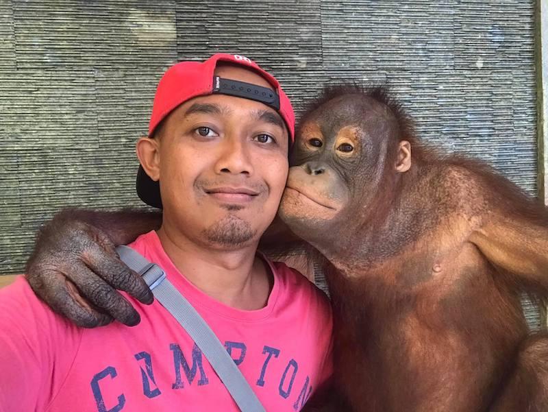 image - bali driver dewa with orangutang