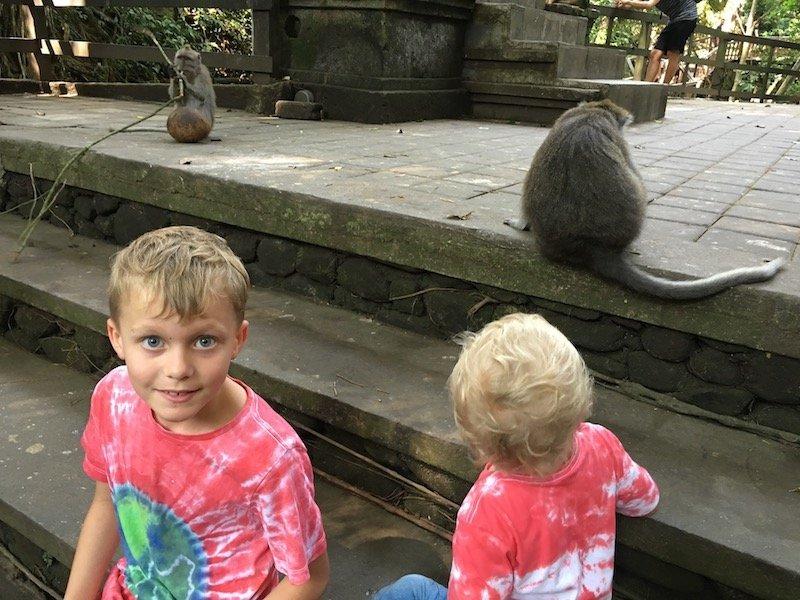 image - bali monkey forest ubud