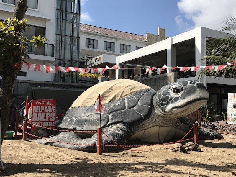image - bali sea turtle rescue hub
