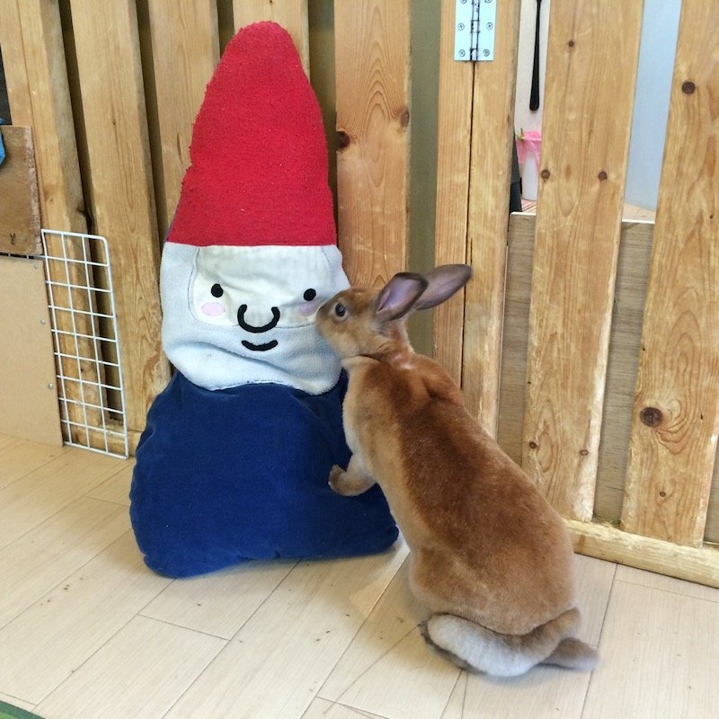 image - harajuku rabbit cafe kiss 800