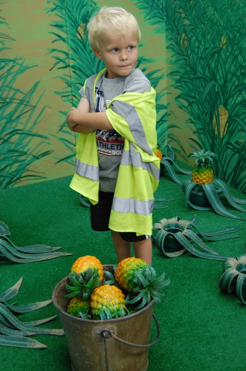 image - hawaii children's discovery center pineapple field