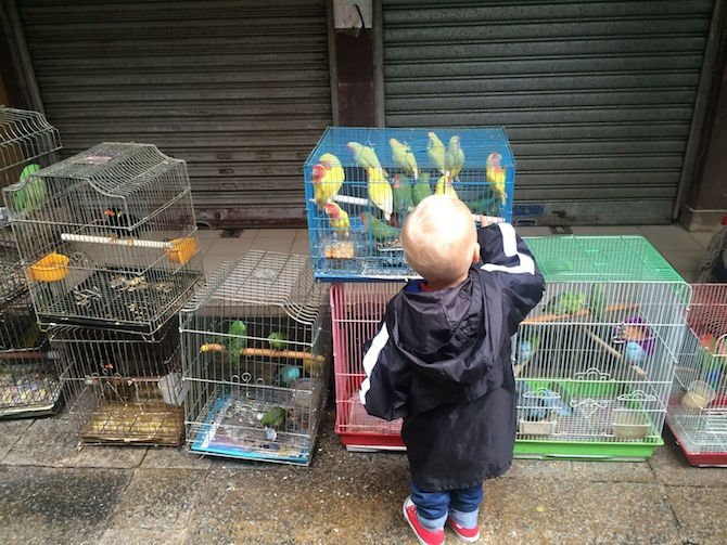 image - yuen po bird gardens jack at cages 670
