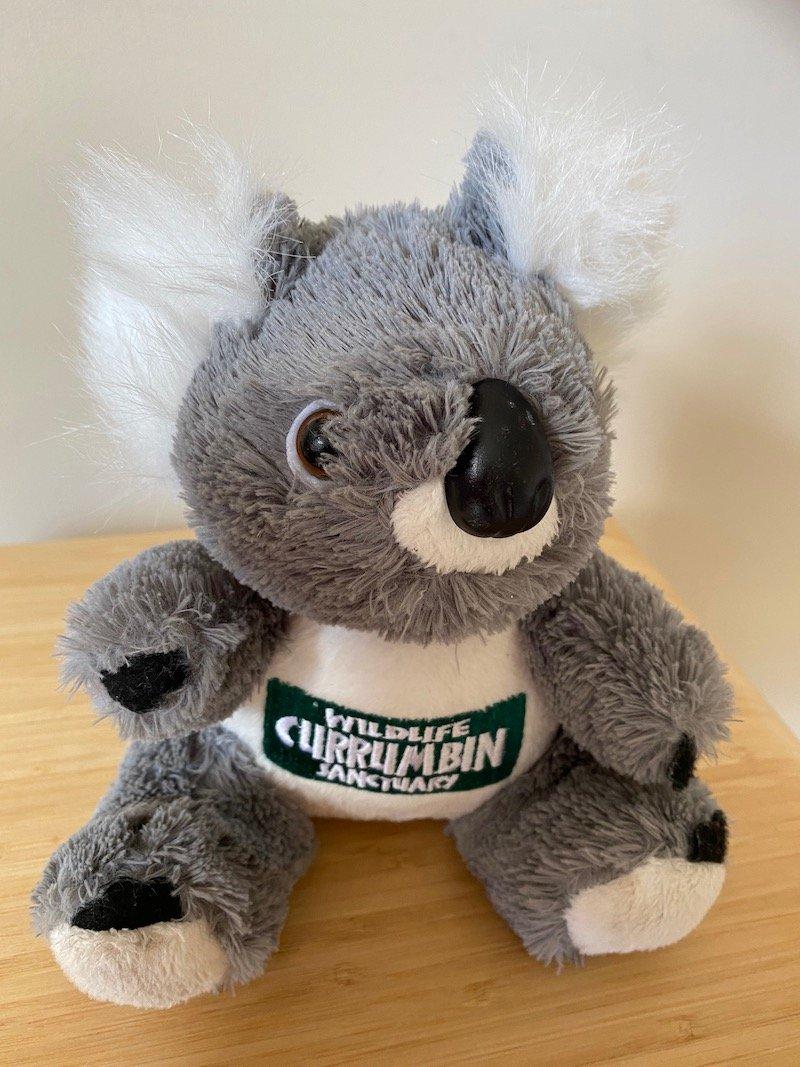 image - currumbin wildlife sanctuary gift shop koala pic