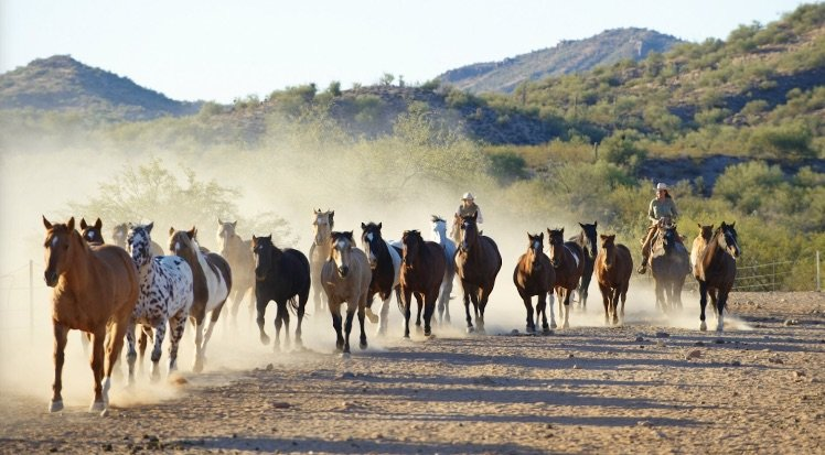 image - rancho de los cabaleros arizona