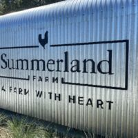 image - summerland house farm alstonville a farm with heart