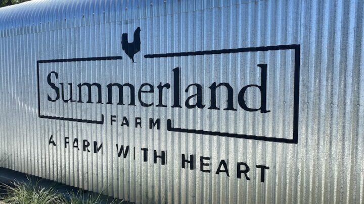 image - summerland house farm alstonville a farm with heart