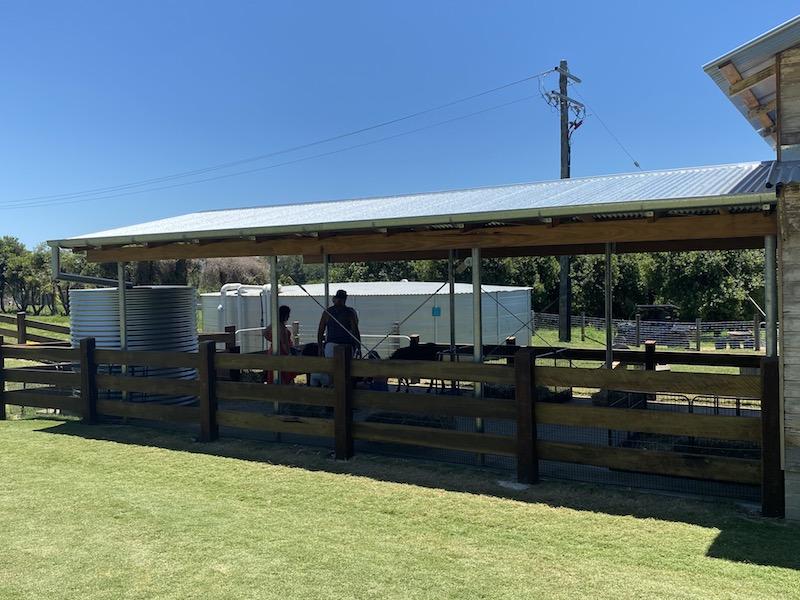 image - summerland house farm alstonville animal encounters