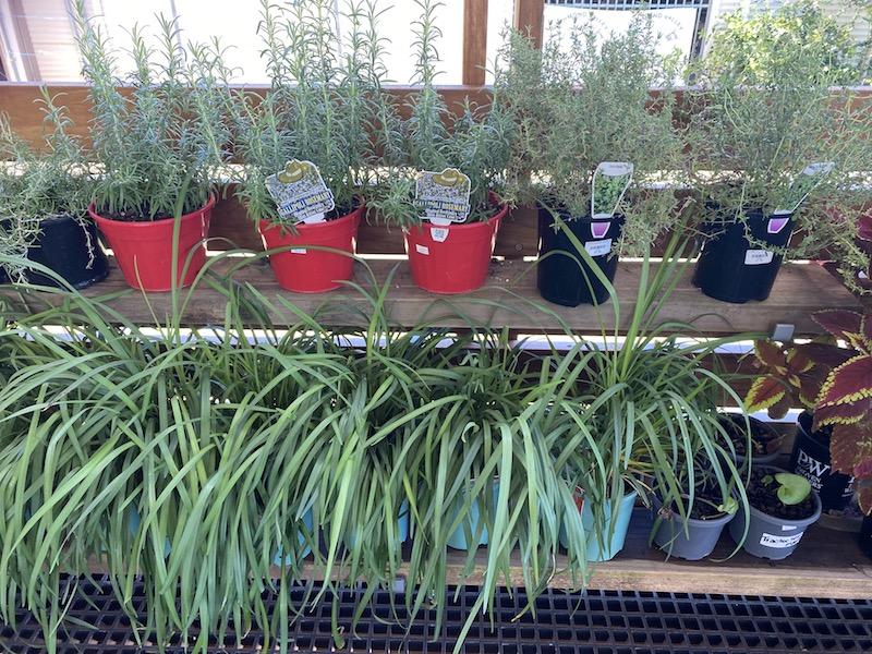 image - summerland house farm shop herbs