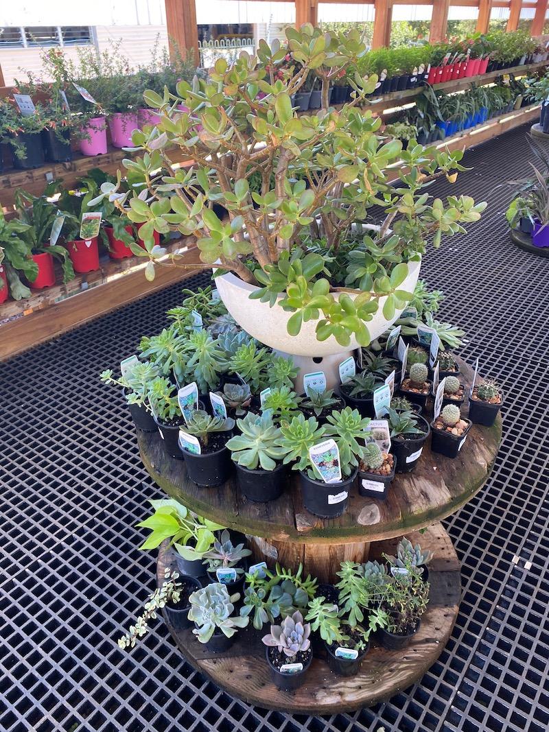 image - summerland house farm shop succulents
