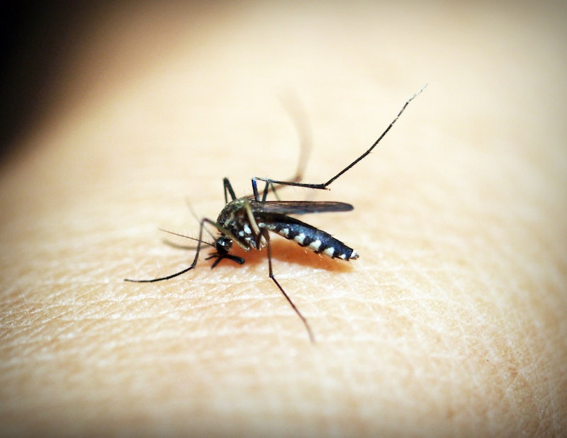 image - mosquito by pexels