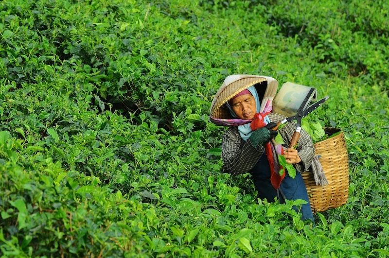 image - chatime tea leaves